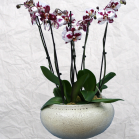 05 Triple Orchid Display