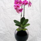 01 Single Orchid Display